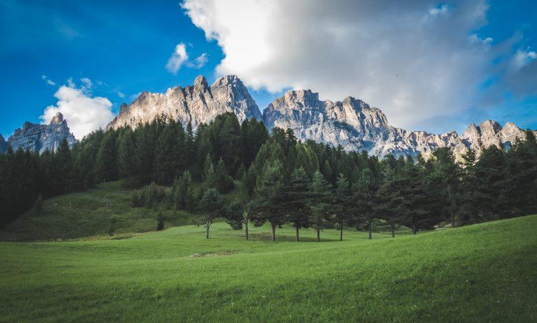 cambiamenti climatici foreste