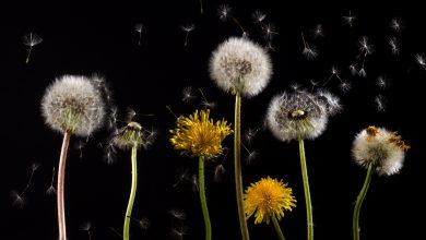 clima salute allergia pollini