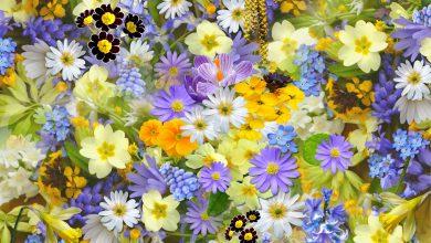 fiori clima