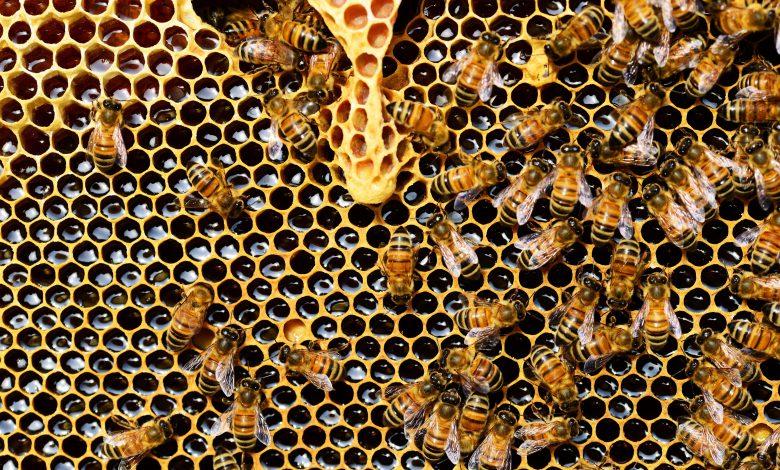 api biodiversità
