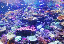 Riscaldamento globale oceano