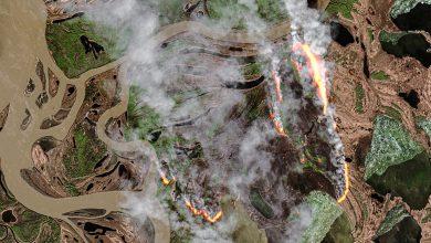incendi zombie