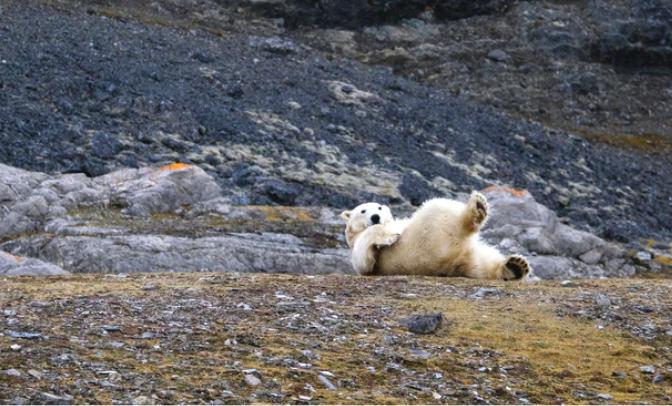 svalbard norvegia parco nazionale