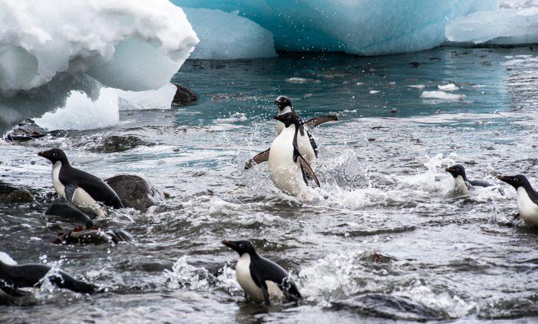 riscaldamento globale - pinguini