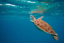 tartarughe marine italia