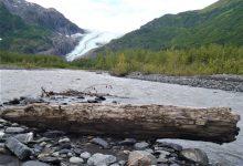foresta ghiacciaio alaska