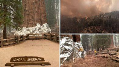 incendi sequoia
