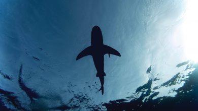 biodiversità squali